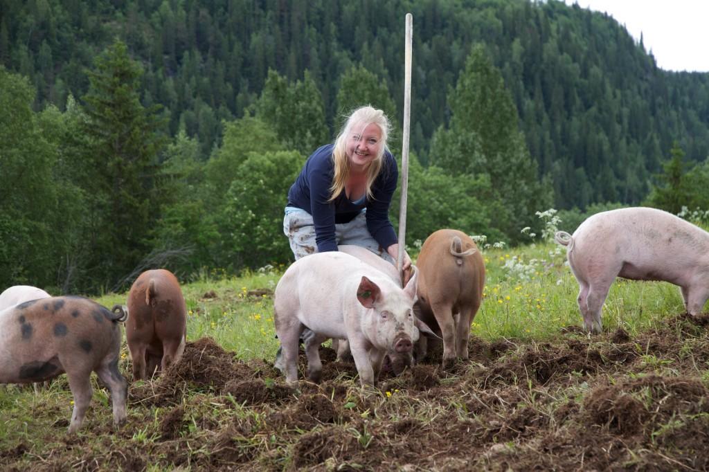 økologiske griser